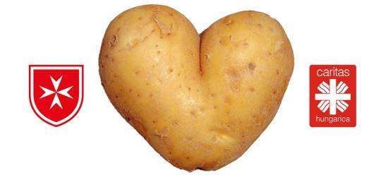 286864_krumpli